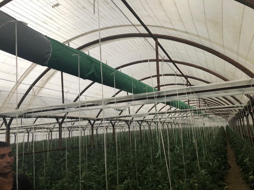 우즈베키스탄 토마토농장(2)